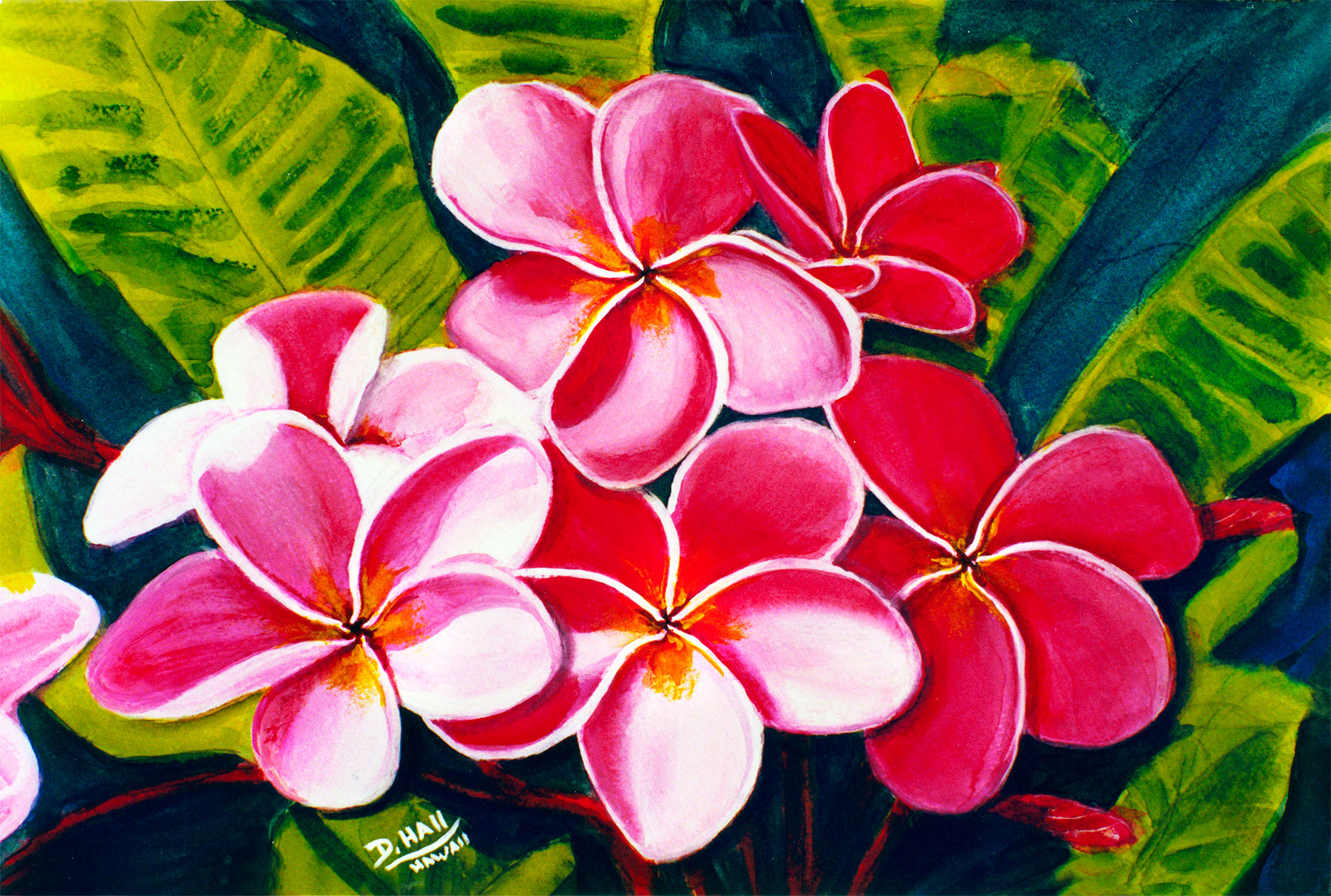 Hawaii plumeria flowers art paintings for sale hawaiian plumeria plumeria flower hawaii tropical flowes art prints painting by hawaii artist donald k izmirmasajfo