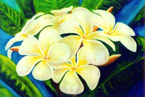 Plumeria  flower, hawaii tropical flowes  art prints, painting by hawaii artist Donald K. Hall #158