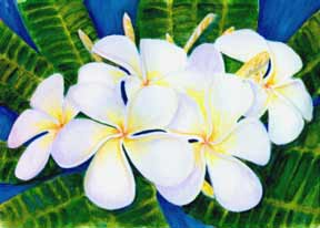 Plumeria  flower, hawaii tropical flowes  art prints, painting by hawaii artist Donald K. Hall #208