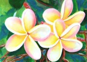 Plumeria  flower, hawaii tropical flowes  art prints, painting by hawaii artist Donald K. Hall #213