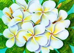 Plumeria  flower, hawaii tropical flowes  art prints, painting by hawaii artist Donald K. Hall #224