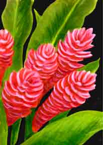 Red Ginger flower, Hawaii tropical flowes  art prints, painting byHhawaii artist Donald K. Hall #235