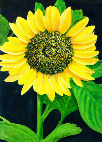 hawaii Art prints, Sun flower painting by hawaii artist Donald K. Hall #239