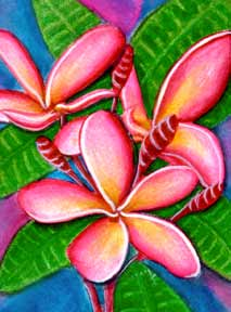 Plumeria  flower, hawaii tropical flowes  art prints, painting by hawaii artist Donald K. Hall #243
