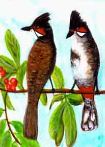 hawaiian art prints, Red Whiskered Bulbul, painting by hawaii artist Donald K. Hall #246