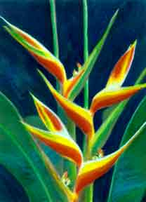 Heliconia, hawaii tropical flowes  art prints, painting by hawaii artist Donald K. Hall #249