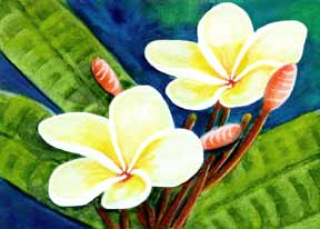 Plumeria  flower, hawaii tropical flowes  art prints, painting by hawaii artist Donald K. Hall #302