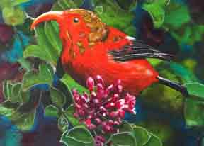 hawaiian art prints, I'Iwi Bird, original painting by hawaii artist Donald K. Hall #339