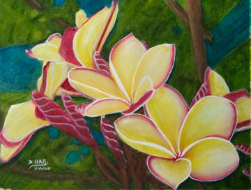 Hawaiian Plumeria Flowers Painting Hawaii Plumeria