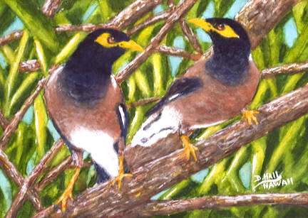Mynah Birds Original Water Color Painting by Hawaii Artist Donald K Hall  #474