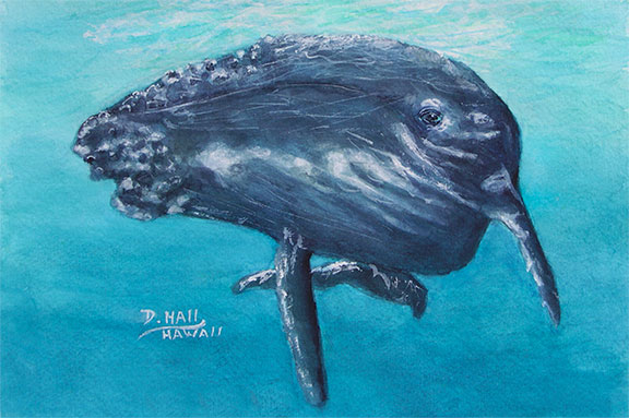 Humpback Whale, Original Water Color  Art Painting and prints for sale No:490