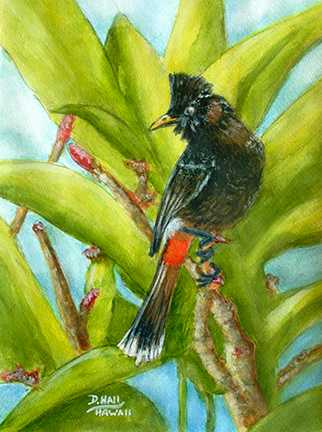 Red Vented Bulbul hawaii birds Water Color Painting for sale #512