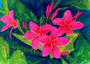 Plumeria  flower, hawaii tropical flowes  art prints, painting by hawaii artist Donald K. Hall #61