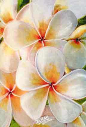 Plumeria flowers Art Paintings for sale   Hawaiian Plumeria Flower Art
