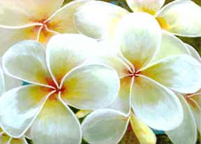 Hawaii Flower Art, Print, Hawaiian Flowers by Hawaii Flower artist Donald K. Hall.